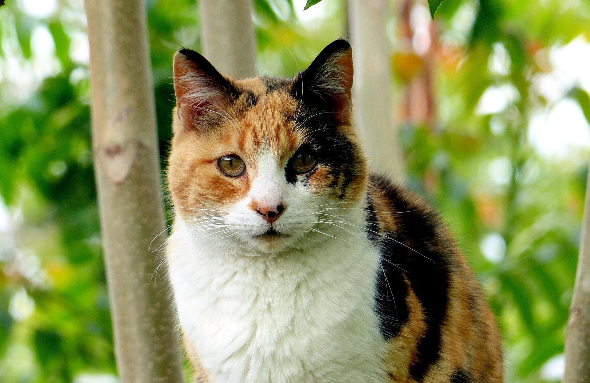 三毛猫 - Cat Scanner